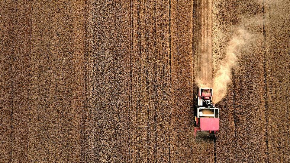 Ausnahmezustand auf dem Weizenmarkt: Staaten blockieren Exporte, Preise steigen stark