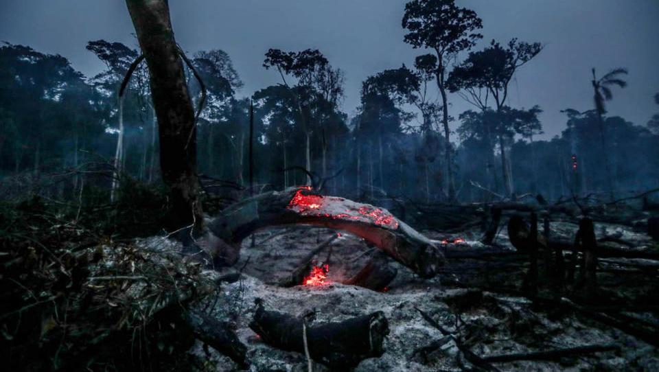Neue Satelliten-Bilder: Die Zerstörung der Regenwälder nimmt rapide zu