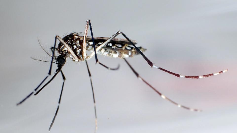 Erstmals West-Nil-Virus in Deutschland aufgetaucht
