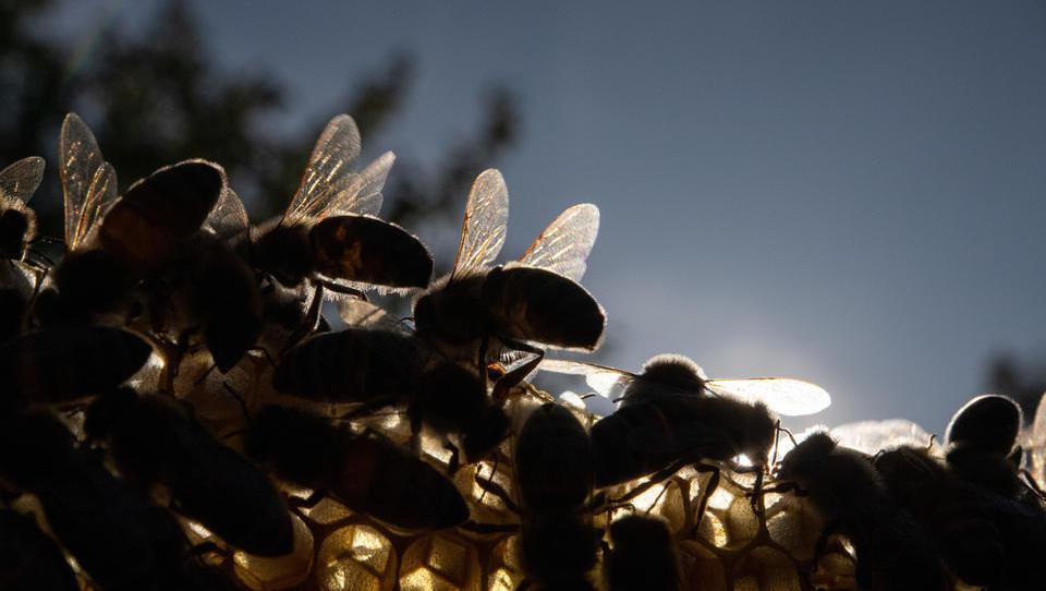 Unbekannte vernichten 45 Bienenvölker im Saarland