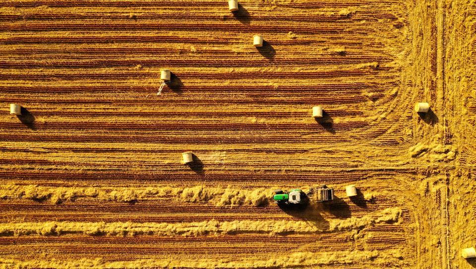 Lebensmittel-Lieferketten brechen: Erste Länder geraten in Bedrängnis, Preise steigen