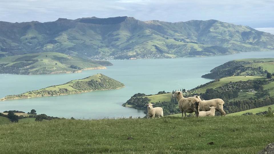 Die Superreichen kaufen Corona-Bunker in Neuseeland