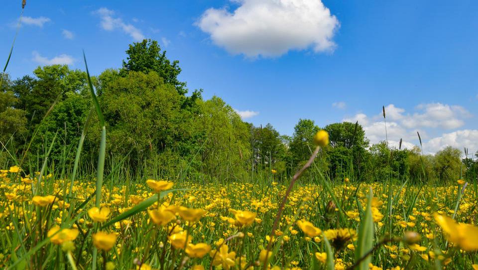 Blühende Landschaften: Ostdeutschland entwickelt sich zum Zentrum der europäischen Elektro-Mobilität