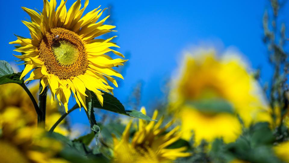Verband: CO2-Sondersteuer vertreibt Ernährungsindustrie aus Deutschland