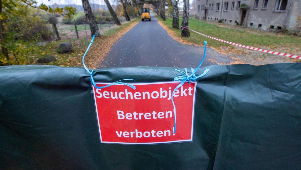 Bundesbehörde behauptet nun: Vogelgrippe in Norddeutschland konnte sich durch Menschen verbreiten