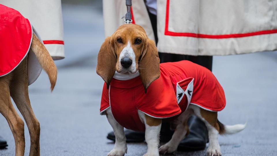 In der Corona-Krise: Kommunen erhöhen Hundesteuer deutlich