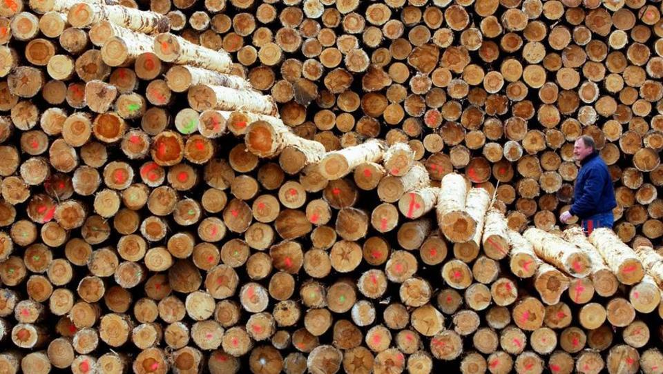China kauft das deutsche Holz auf: Der Bau-Mittelstand steht vor dem Kollaps