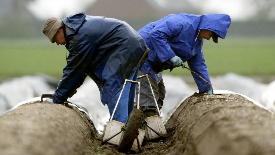 """Bauern fehlen Saisonarbeiter: """"Keiner weiß, wer's machen soll"""""""