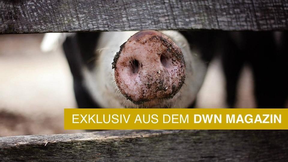 Stoppt Corona die Afrikanische Schweinepest?