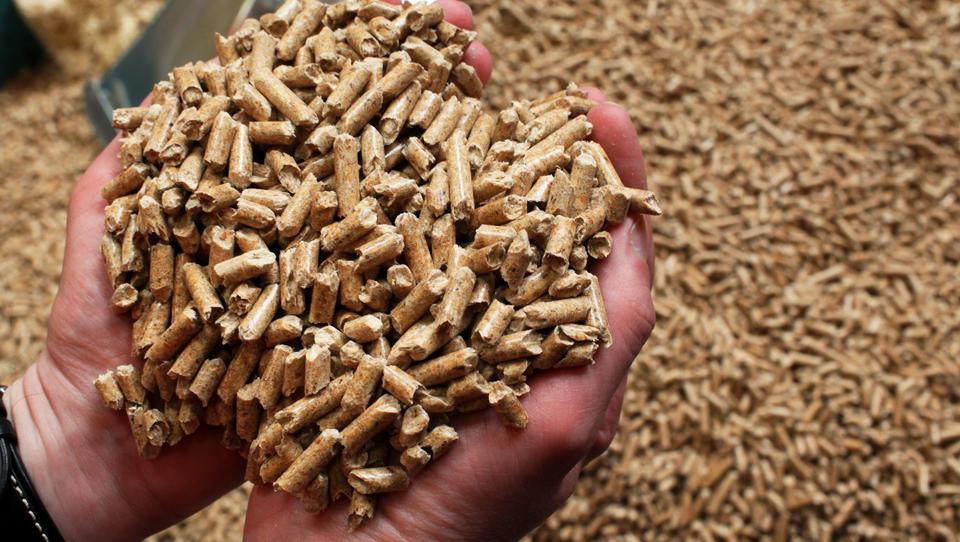Verbrennung von Biomasse schlechter fürs Klima als Kohlekraftwerke
