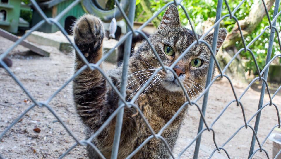 Weil sie mit Corona infiziert sein sollen: Katzen in Hamburg in Quarantäne