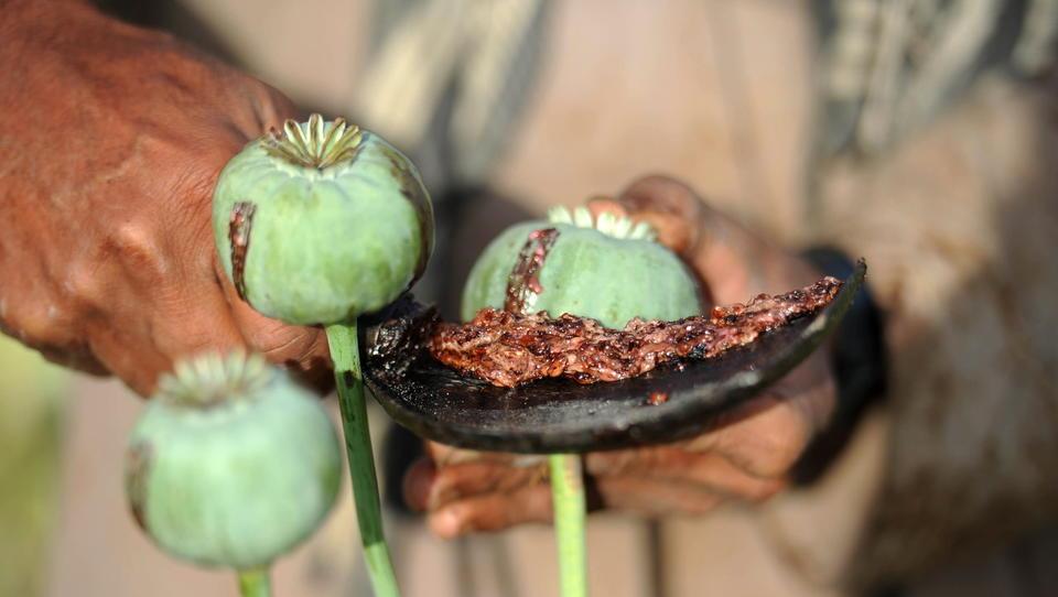 Während des Nato-Einsatzes verdienten die Taliban massiv am internationalen Opium-Handel