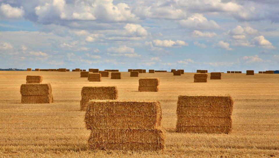 UN melden stärksten Anstieg der Lebensmittelpreise seit einer Dekade