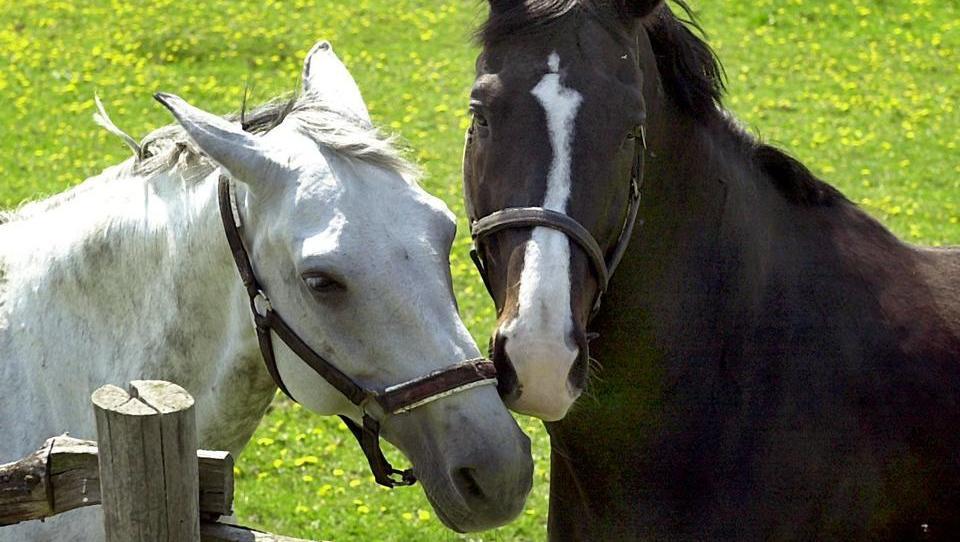 Zeugen gesucht: In Thüringen ist ein Pferde-Mörder unterwegs
