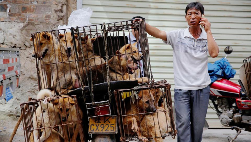 Wegen Corona: Erste Stadt in China verbietet Verzehr von Hunden und Katzen