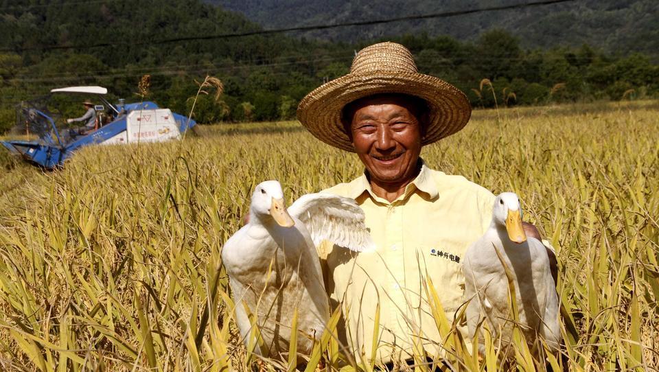 Erste Risse im System? China kämpft gegen Nahrungsmittelknappheit