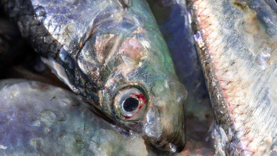 Krise der deutschen Ostsee-Fischerei spitzt sich zu