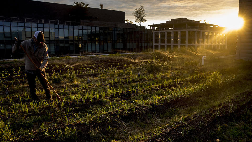 Versorgungs-Sicherheit: Deutschlands Bauern setzen auf Digitalisierung ihrer Ernte-Maschinen
