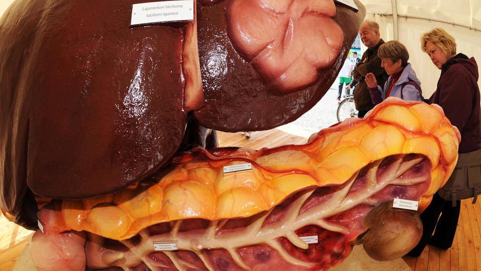 Englische Forscher produzieren künstliche Leber per 3-D-Druck