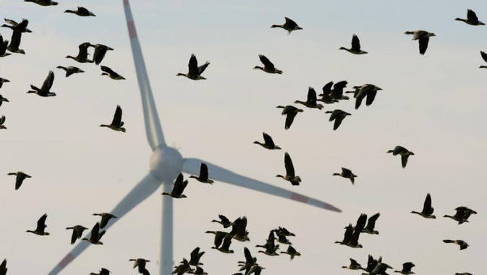 Siemens Gamesa zieht mit neuem Großauftrag deutsche Windparkbranche aus der Talsohle