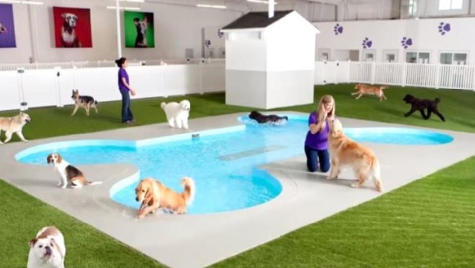 New York baut ersten Luxus-Flughafen für Tiere