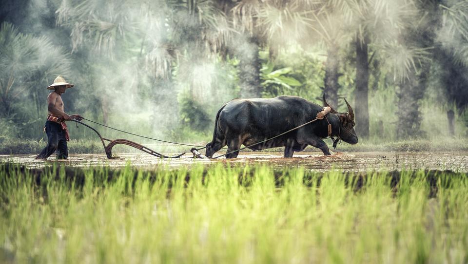 Was bringt das Jahr des Büffels für chinesische Aktien?