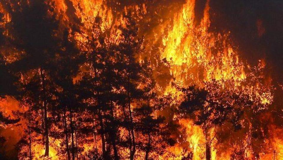 Feuer nähert sich Urlaubsgebieten: Deutsche Touristen in Antalya fürchten um ihr Leben, Bundesregierung muss handeln