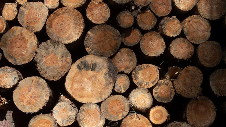 """Holzpreis-Explosion führt Zulieferer zunehmend """"in prekäre Lage"""""""