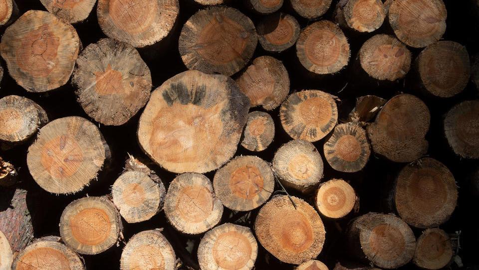 Wo bleibt das Holz?Materialmangel macht Bauen bis zu 20 Prozent teurer