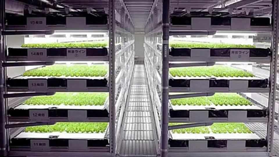 Salat per Knopfdruck: Japan baut weltweit erste Roboterfarm
